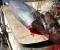 Νέα Κίος: Ψάρεψαν και δεύτερο καρχαρία μέσα σε δύο μέρες