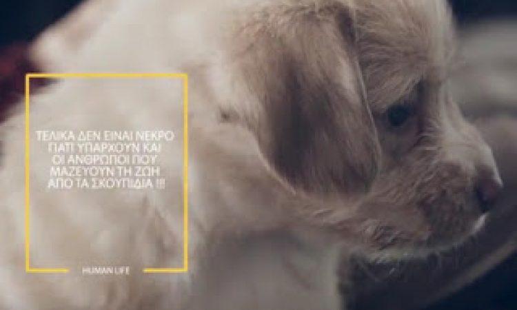Dogslife. Η συγκλονιστική ιστορία ενός αδέσποτου κουταβιού, στα Τρίκαλα [video]